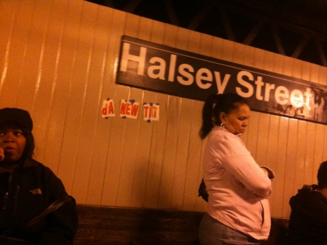 Halsey Tit
